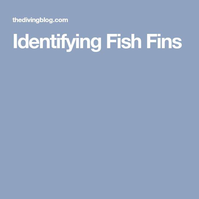 Identifying Fish Fins