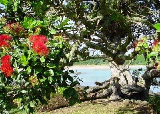 The Pohutakawa Beach House at Tapuaetahi in Tapuaetahi Beach | Bookabach | New Zealand