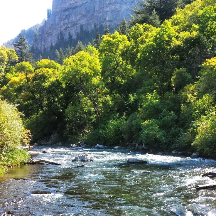 1000 images about trout fishing on pinterest green for Fly fishing green river utah