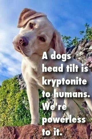 Yes it is...
