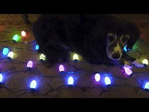 MSGEQ7 Hacked GE Christmas Lights Arduino Color Organ - YouTube