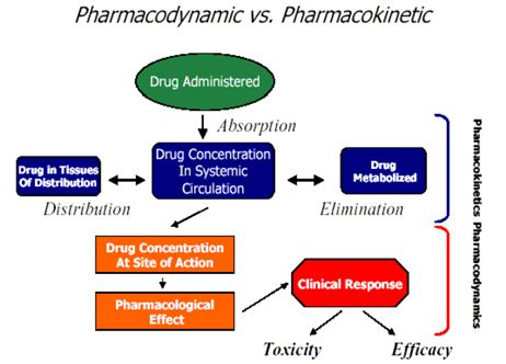 Whats the difference between Pharmacy and Pharmacology in school?