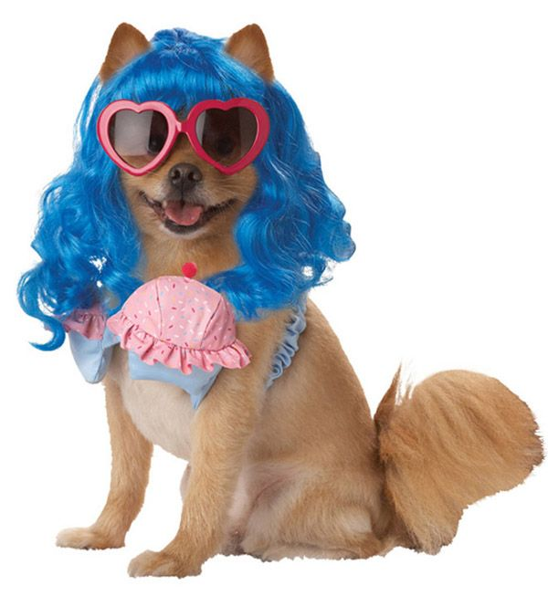 30 Most Funniest Dog Costumes that will cheer you up - Halloween Dogs