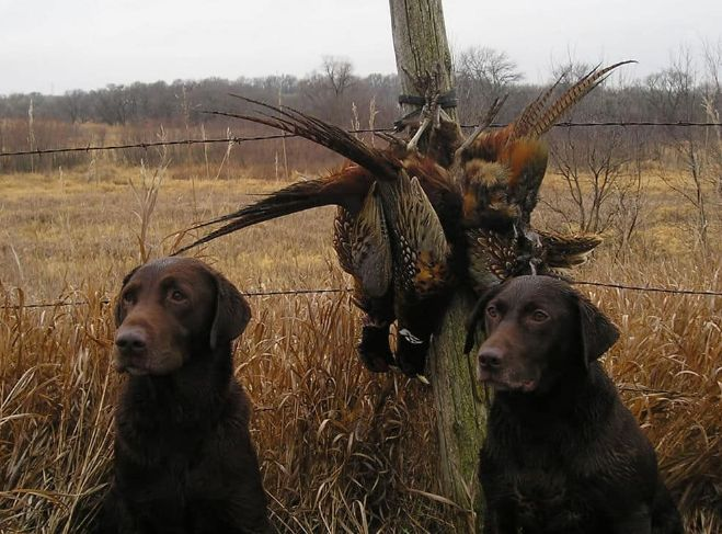 Hunting Dog Names: Ultimate Guide On Naming Your Canine - Rifles HQ