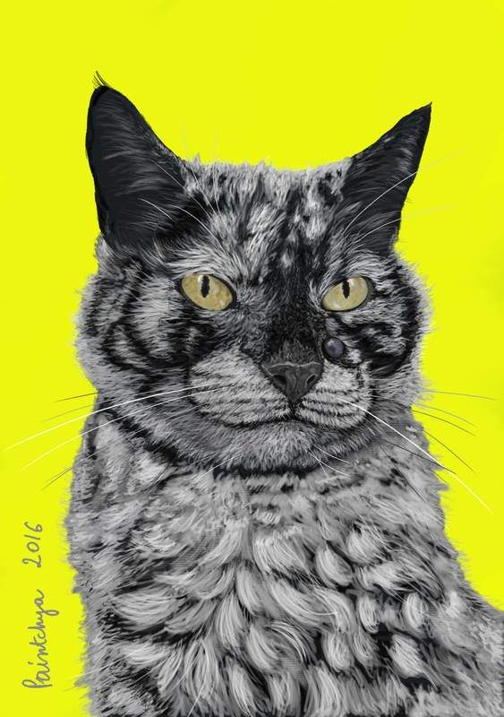 Scrappy, the cat portrait, digital art by Paintchya.com. Digital art, made to order. Art as gift. Custom made art. Printable custom made art for mugs, t-shirts, journals, home decor etc.