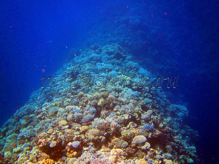 Подводный мир – это одно из самых неизученных мест на свете. Морское дно и его обитатели всегда привлекли людей своей необычайной красотой и загадочностью. Благодаря появлению такого вида погружения под воду, как снорклинг любой человек, умеющий плавать, может насладиться красотой подводного мира и запечатлеть эту красоту при помощи фотоаппарата.