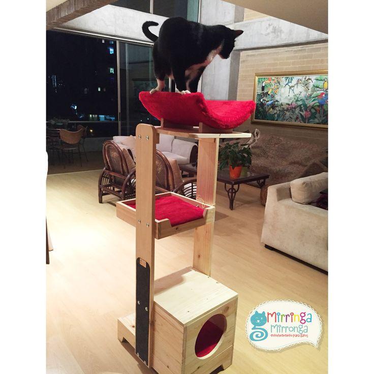 Mejores 65 im genes de gimnasios para gatos en pinterest for Gimnasio 88 torreones avila