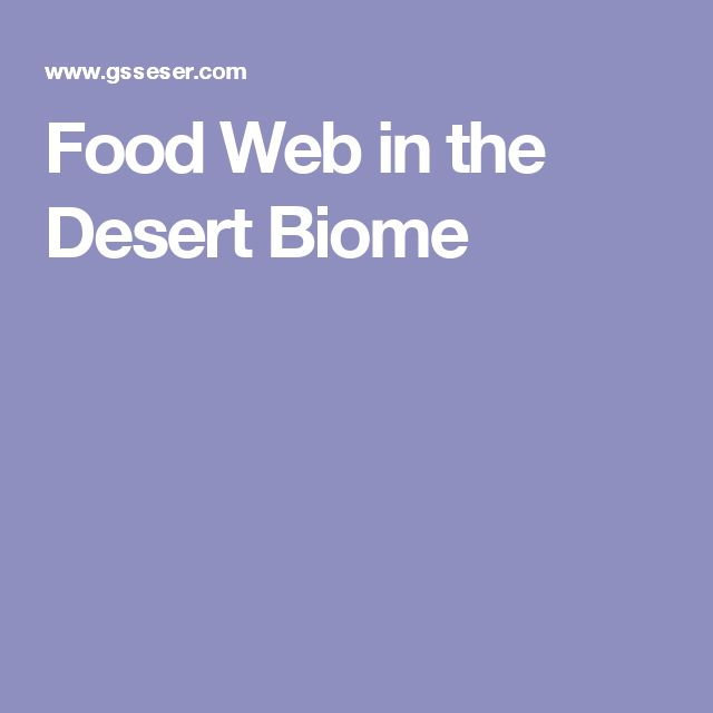 Food Web in the Desert Biome