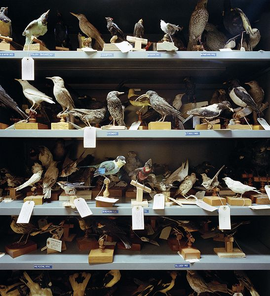 Discover a Victorian taxidermy treasure trove filled with numerous birds, butterflies and even a bone collection. Established in 1874, the Booth museum of Natural history is a reflection of one man's eccentric quest to capture an example of every single British bird in existence.