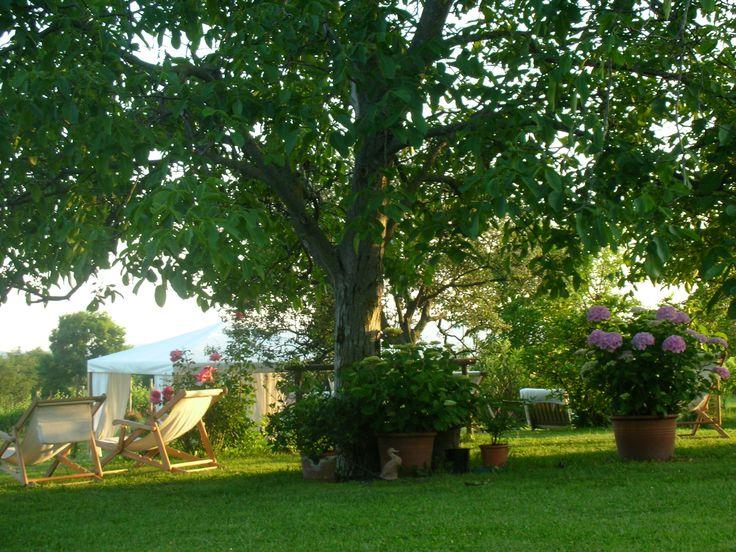 All 39 ombra degli alberi e tra le ortensie momenti di pace for Alberi sempreverdi da ombra