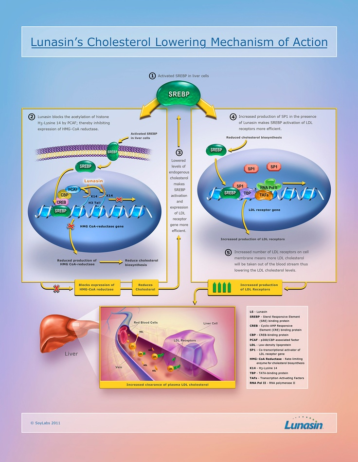 164 best images about how to lower cholesterol on for Does fish oil lower cholesterol