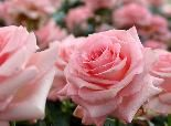 23 Best Plants for Allergy Sufferers | The Weather Channel