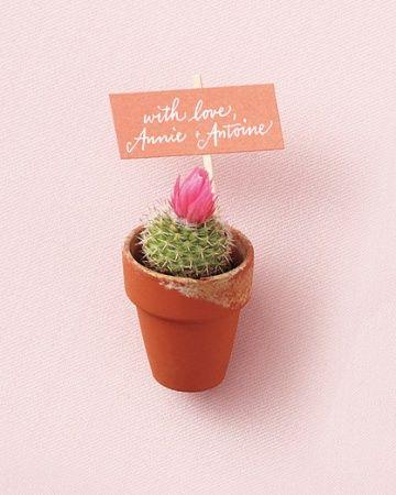 mini potted cactus wedding favor wedding favors. Black Bedroom Furniture Sets. Home Design Ideas