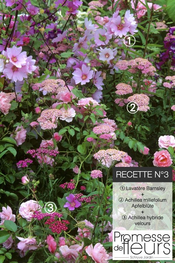 ✿ Recette de jardin #3 ✿ Du rose, du rose !! Pour un jardin romantique, voici la recette: Lavatère Barnsley (réf 9533) + Achillea millefolium Apfelblüte (réf 9534) + Achillea hybride Velours (réf 7407) à retrouver sur www.promessedefleurs.com