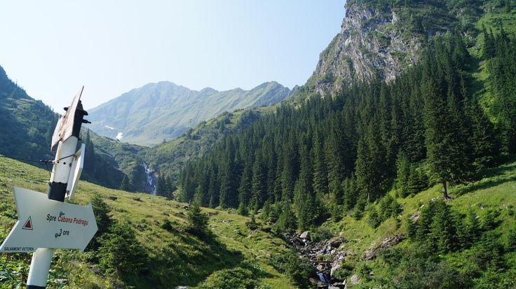 Вернулись из Фэгэраша счастливыми и довольными. Погода радовала ясным небом и теплыми деньками. Вся группа взошла на самую высокую вершину румынских карпат - г. Молдовяну (2544м), хотя некоторым это далось нелегко. Присоединяйтесь к нашим путешествиям.