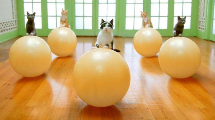 Meow mix: Contemporary Art Museum St. Louis hosts a cat video festival : Entertainment