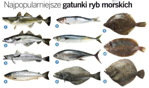 ryby morskie - Szukaj w Google