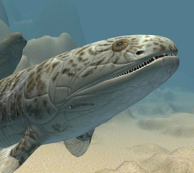 Gogonasus andrewsae, un pez pulmonado que habitó un arrecife de coral hoy petrificado llamado el Gogo (en la actualidad en Kimberley, Australia occidental) hace ~375 millones de años. Dentro de su cráneo se han descubierto interesantes estructuras que lo emparentan con los animales terrestres, o tetrápodos.