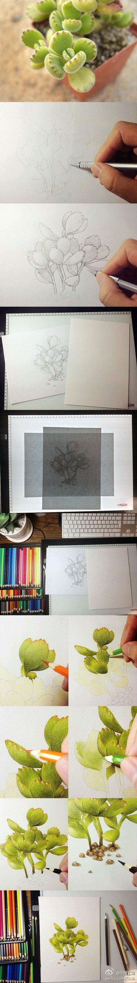 Step by step colored pencil drawing of a plant.