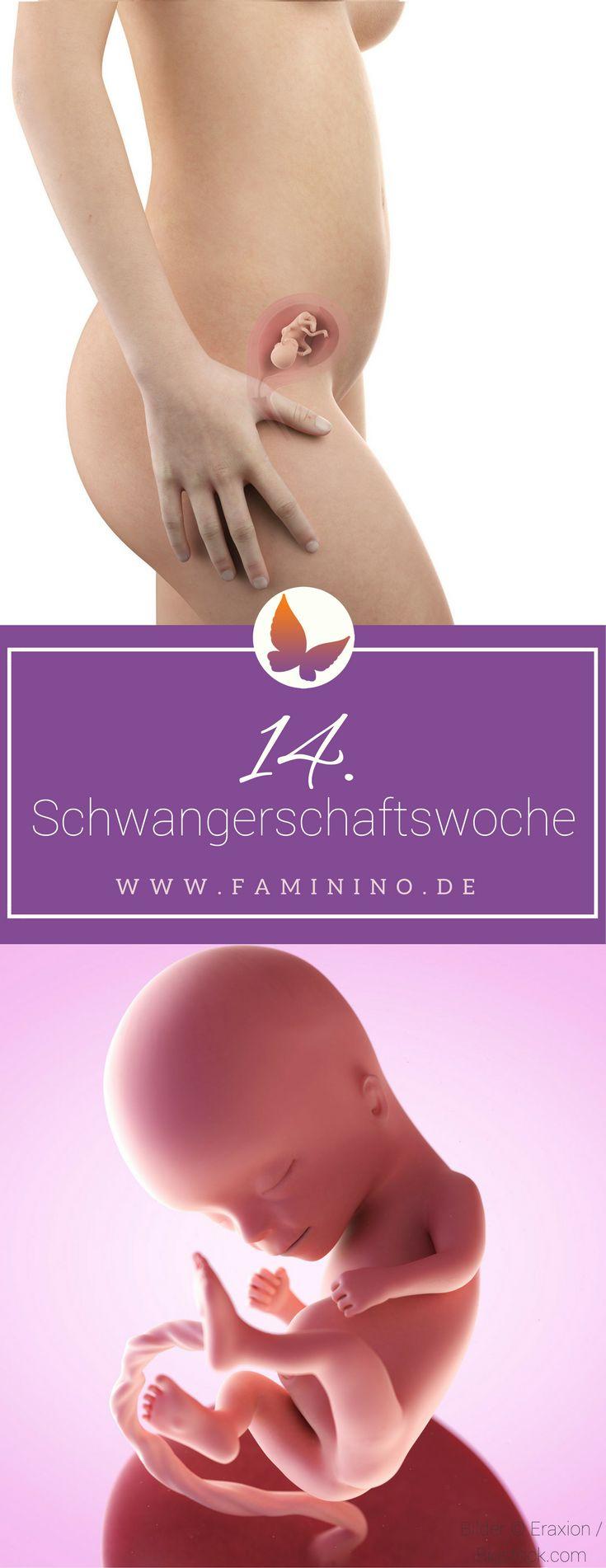 14. SSW (Schwangerschaftswoche)