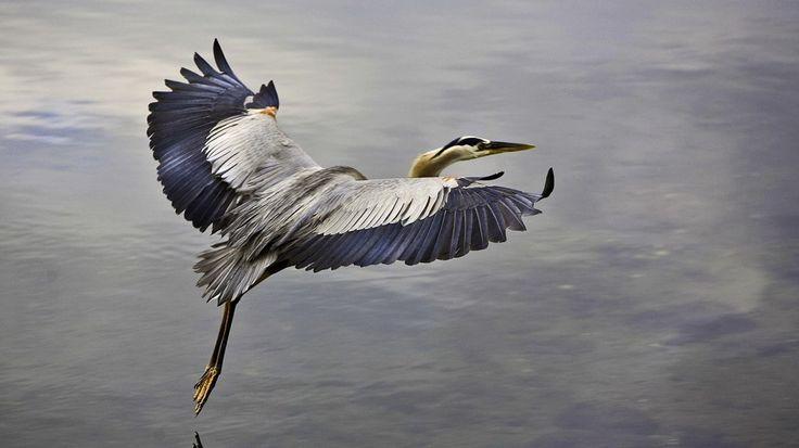 crane-bird becsület, hűség és béke