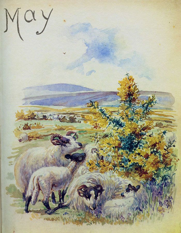 Sheep and gorse - Morning Earth Artist/Naturalist Edith Holden