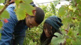 Du cap à la côte : les Sud-Africains découvrent la Bourgogne - France 3 Bourgogne