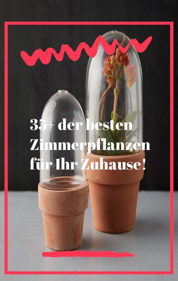Diy Leder Und Holz Zimmerpflanze Spalier Wand Tutorial Boho Interiors Wohnkultur Projekte Vintage Revivals Plant In 2020 Plants Herb Planters Peperomia