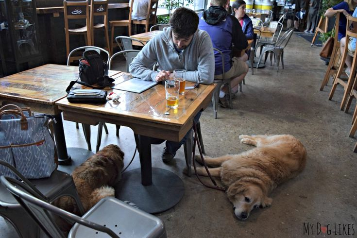 Wondering what to do WITH dogs on a rainy day in Asheville, NC? Check out this post for info on dog friendly shops, breweries and restaurants!