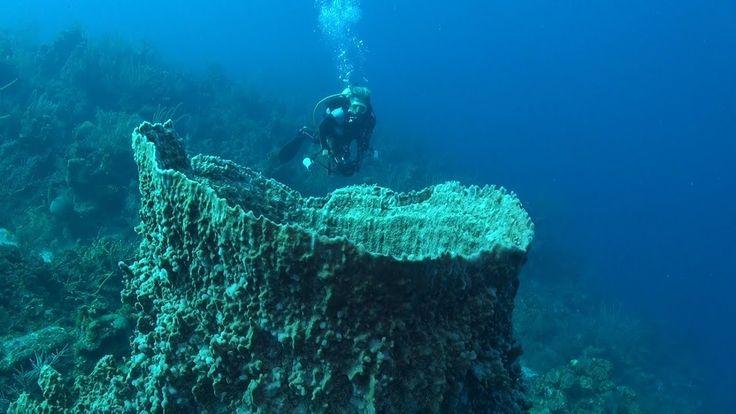Belize Aggressor