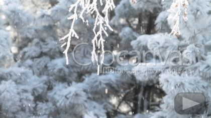 Check out this Sun Season Forest HD Stock Footage Clip. Static shot made at dawn. Close-up. 2011-02-16.