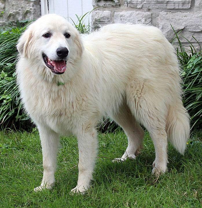 Big Fluffy Dog Rescue Facebook
