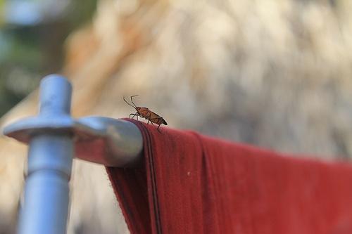 Insecto explorando
