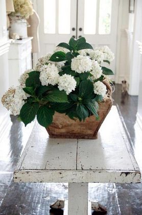 Love these white geraniums & the cool colour scheme in this lovely bright entrance hall