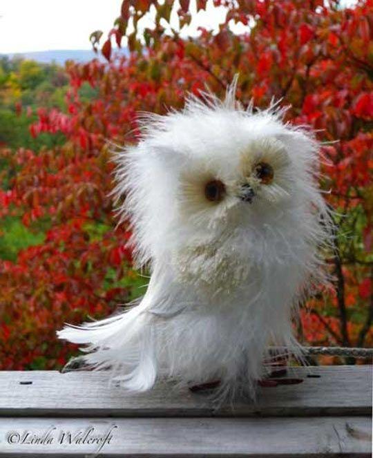 Ehehehehehe, Que coruja tão gira e despenteada :)