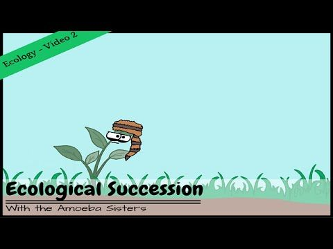 Ecological Succession: Nature's Great Grit. Discover a process that truly demonstrates nature's grit: ecological succession! The Amoeba Sisters introduce both primary and secondary succession. This is the second video in the Ecology mini-series.