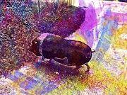 "New artwork for sale! - "" Pot Bellied Pig Animal Pigs Thick  by PixBreak Art "" - http://ift.tt/2tQp1AP"