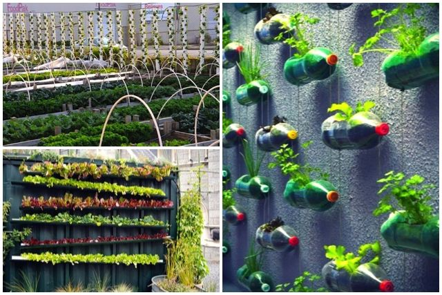 Best 25+ Vertical Vegetable Gardens Ideas On Pinterest