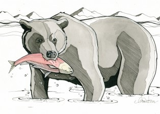 Grizzly Bear by Claire Watson