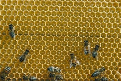 Where can you get bees? What are the ways of finding bees? Here is a beginner's guide to raising bees in your backyard from The Old Farmer's Almanac