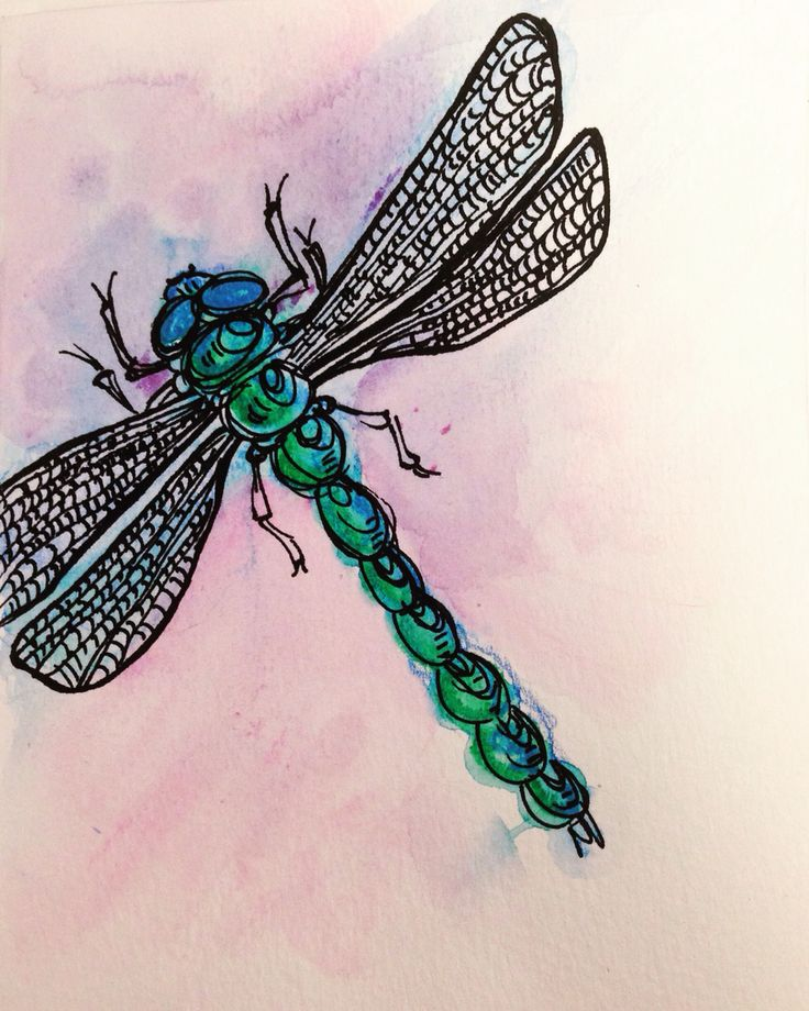 Dessin de libellule - dragonfly drawing Par Marythée Daigle #dessin #drawing #illustration #aquarelle #watercolor #art #libellule #dragonfly