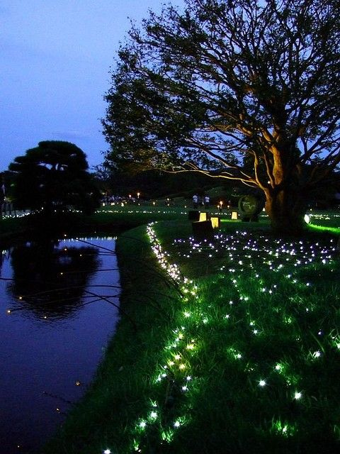 Little white fairy lights all over the ground!