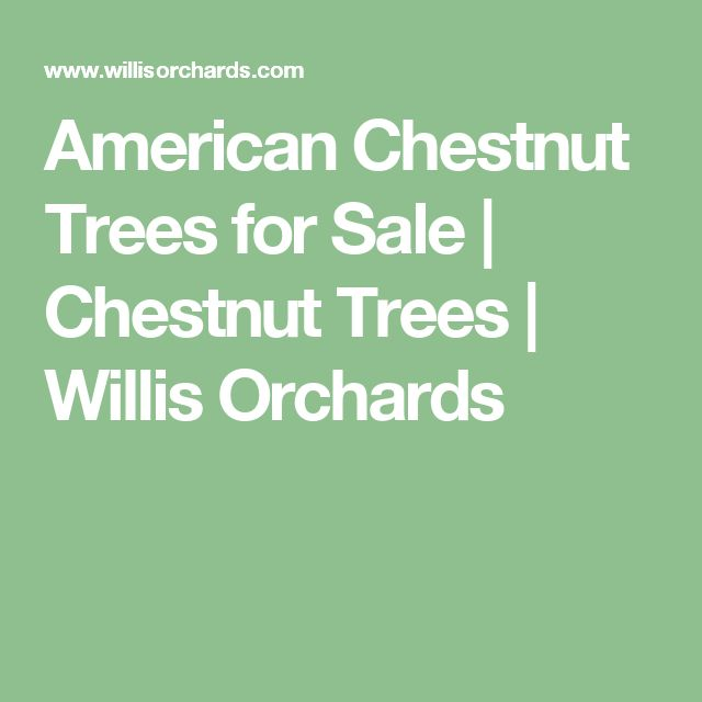 American Chestnut Trees for Sale | Chestnut Trees | Willis Orchards