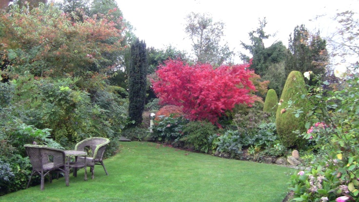 The brilliance of acer, autumn Rockvale gardens