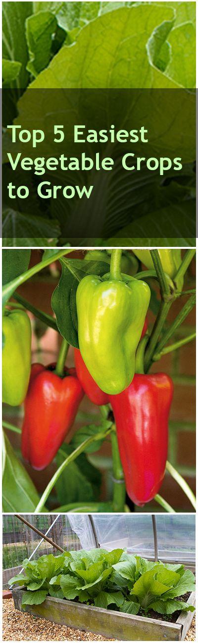 5 Easiest Vegetable Crops to grow- easy veggies for beginning (and seasoned!) gardeners.