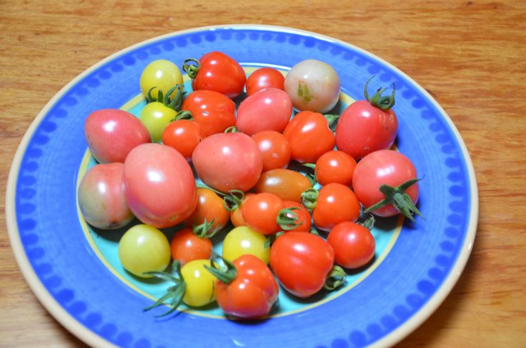 The joys of the self-sown cherry tomato.  »  My Productive Backyard » Learn to Grow your Own Food at Home