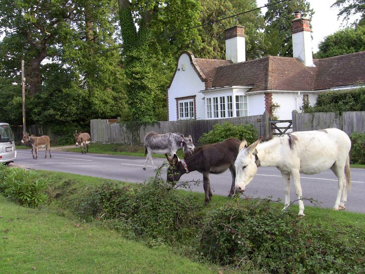 7: Brockenhurst, Hampshire.. You can't miss this if you go through the New Forest. Nothing beats my home village of Longparish. It's quite nearly it. So pretty. We are not all the same......