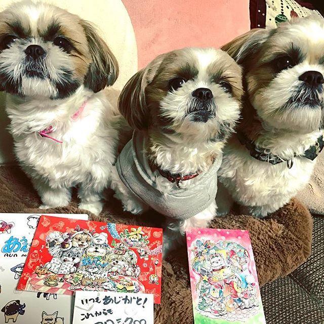 masumon623 : 届きましたよぉ〜🐶 可愛いクリスマスカード🎄も一緒です😊♬ありがとう💖 ☆ ☆ ☆ #シーズー#シーズー多頭飼い #シーズー大好き部 #シーズー親子 #シーズーファミリー#いぬ#犬#愛犬#癒し#かわいい#いぬのいる生活 #あうんのてんぽ #クリスマスカード#shihtzu #shihtzulovers #shihtzugram #instashihtzu #iloveshihtzu #dogs#dogstagram #instadogs #lovely#lovelydog #nodognolife