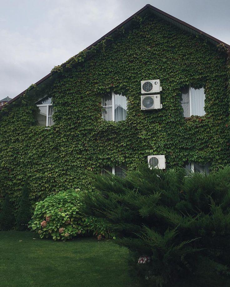 А вот наш дом, вид с внутреннего двора. Скажите же, крутой?😍Обожаю, когда стены, забор, навес плотно увиты чем-то таким зелёным - виноградом, вьюнком и пр. Так красиво, что хочется остаться здесь жить🌿🌲🌿🙈🌿🌲🌿 . . . #отпускссемьей #аше #сочи #черноеморе #жильенаморе #зелень #ashe #sochi #blacksea #green #dreamhouse #вдохновение #vsco #vscorussia #vscohouse