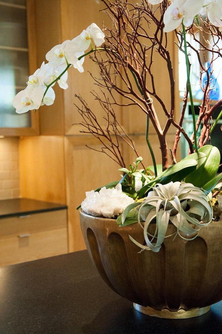 Best images about orchidé on pinterest